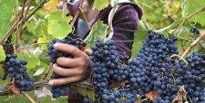 Productores de fruta destacan regreso del horario de invierno