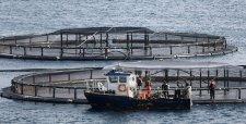 Exportaciones de salmones a Japón, Estados Unidos y Brasil caen 11,2%