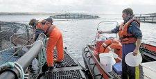 Alga tóxica dispara los costos de seguros para los productores chilenos de salmón